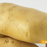 Electrified Potato help fight cancer and diabetes