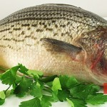 Ingredients for Sea Bass Baked