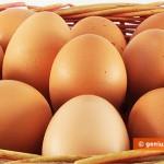 Egg Alarm in Germany