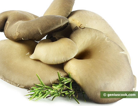 Oyster Mushrooms Help in Slimming Down