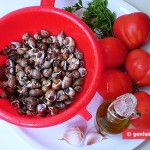 Ingredients for Sea Snails in Tomato Sauce