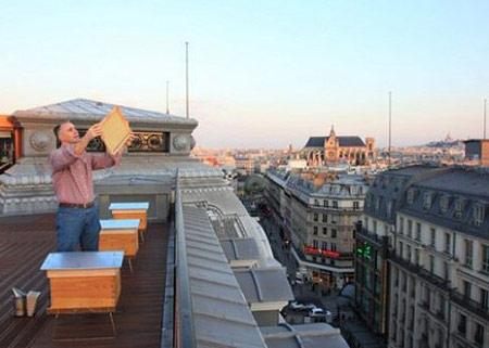 Louis Vuitton Launches Honey Line