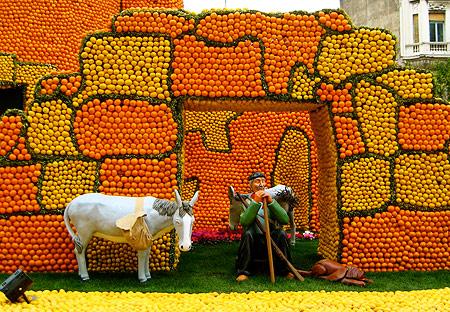 The Lemon Festival