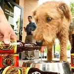 Beer for Dogs