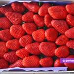 Strawberry for Sorbet