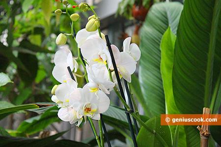 Belle Orchids