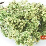Oregano is healthy