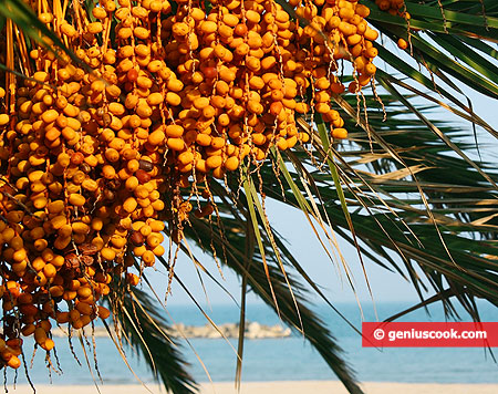 Palm tree with dates against the sea