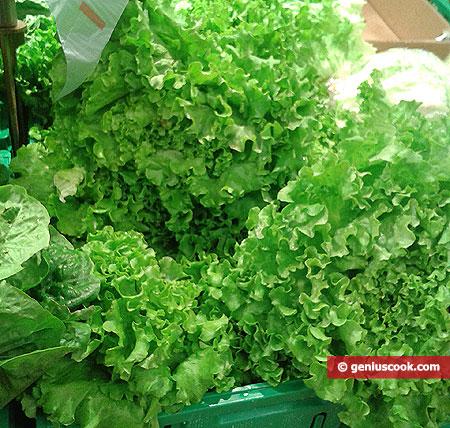 Delicate lettuce