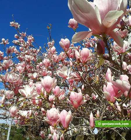 luxuriant flowers