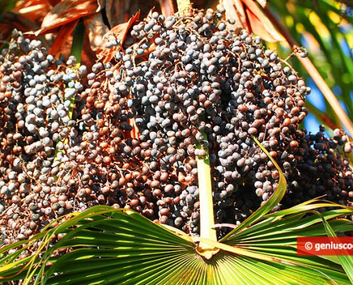 Palm Oil: Helpful or Harmful?